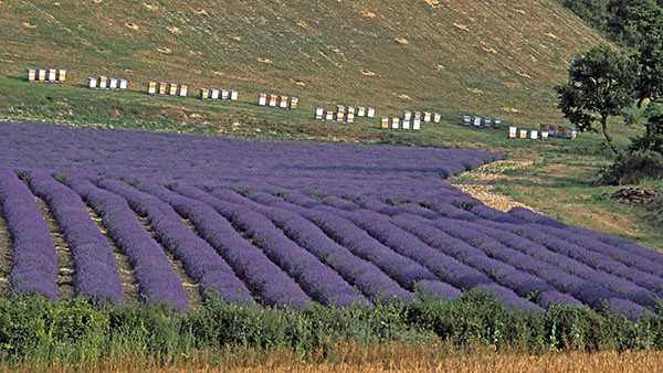 bee hives - Provence