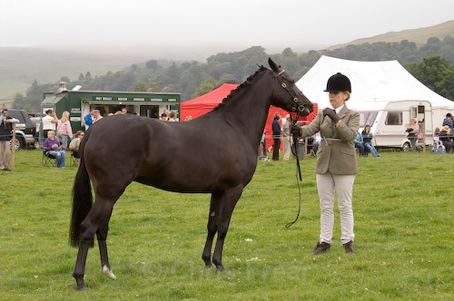 60 - Moniaive Horse Show 2008