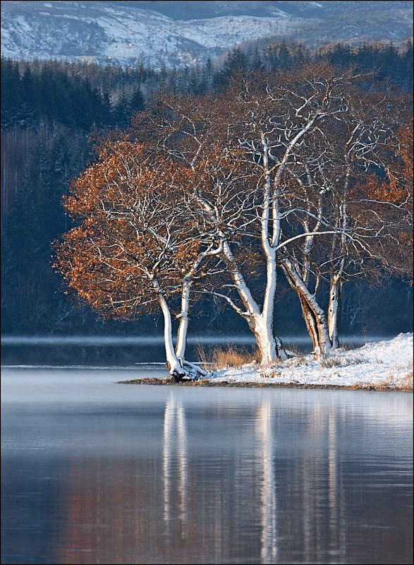 Trees and Snow - Landscapes