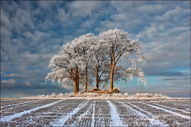 Winter Field - Landscapes