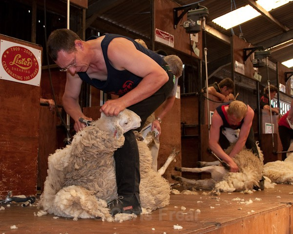 47 - Shearing Competition