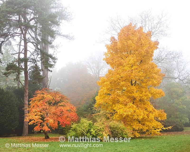 Westonbirt Arboretum - Landscapes