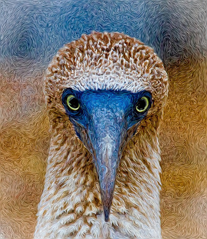 Booby portrait - front - CrazyCat Imagery