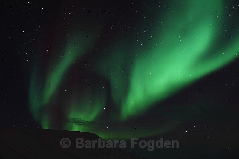 Northernlight in Adventdalen 5393 - Polar night