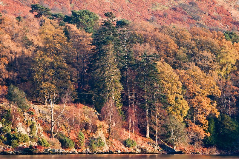 Ullswater autumn trees - Lake District