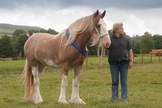 moniaive09-37 - Moniaive Horse Show 2009