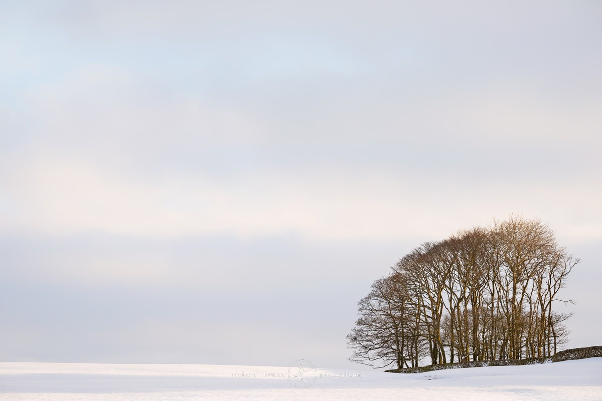 Corner Copse - WINTER