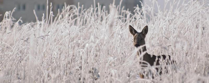 City deer. - The outdoors