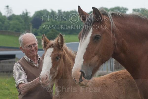 ryecroft-10 - Clydesdales 2013 Include Foals