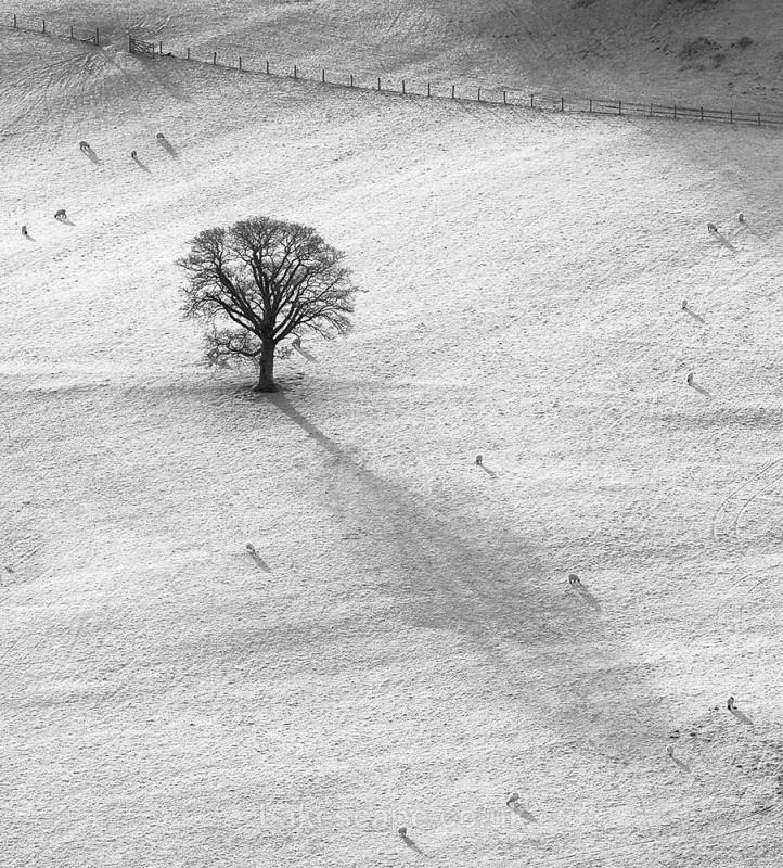 The Field_B&W - Trees