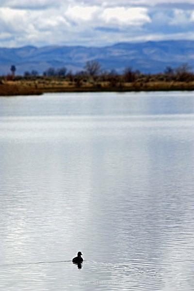 - Nevada Birds
