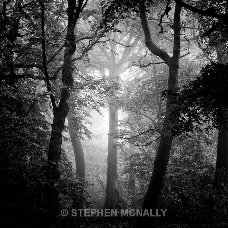 misty trees - Landscapes