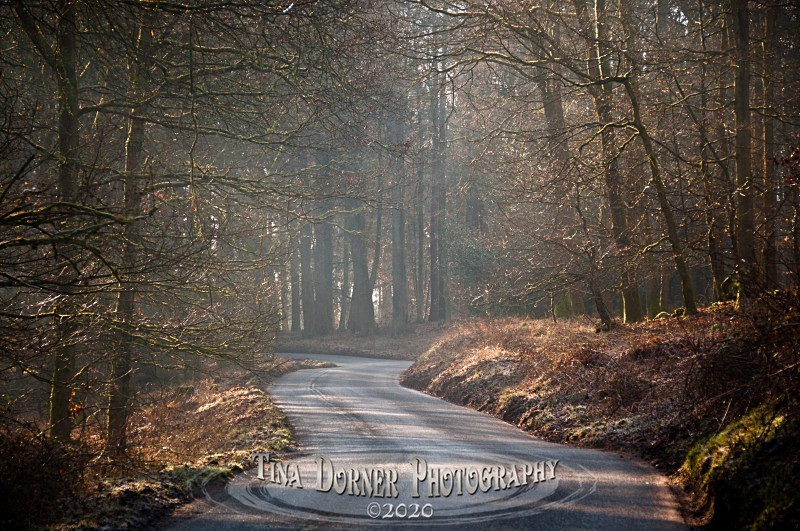 Woodland Road at Soudley. Winter Landscape portfolio by Tina Dorner Photography,  Forest of Dean and Wye Valley, Gloucestershire
