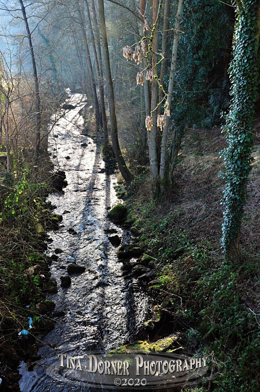 Straight Stream at Soudley by Tina Dorner Photography, Forest of Dean and Wye Valley, Gloucestershire
