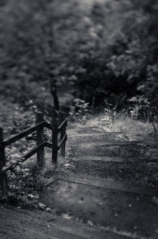 The unknown path. - The outdoors