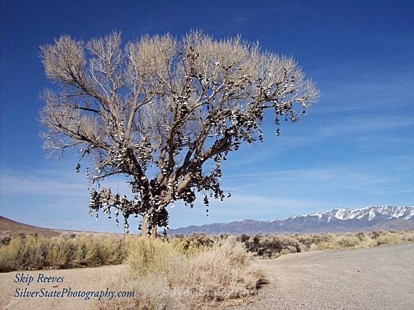 Nevada Shoe Tree - 'Variety'
