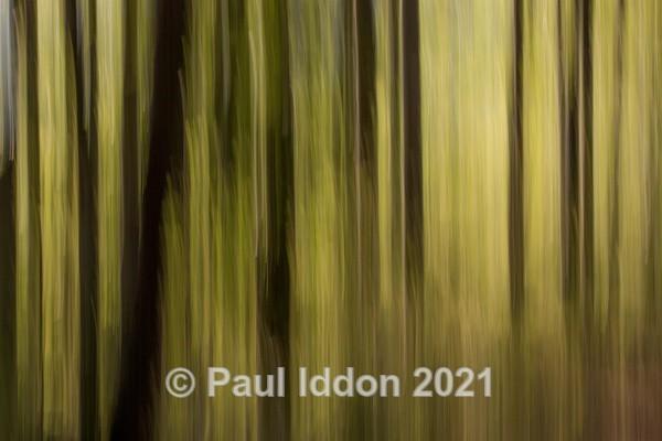 Woods 03 - Creative