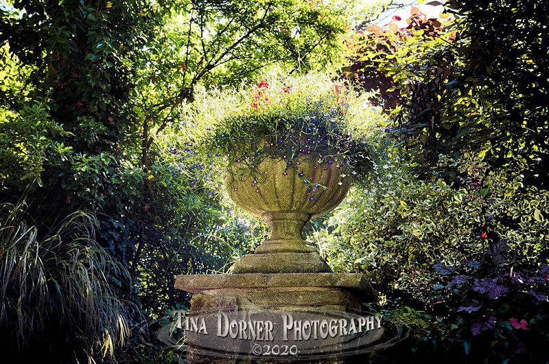 Urn at Dewstow Gardens - Plants & Flowers