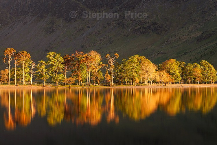 Line of Trees at Sunset | Butteremere, Lake District Location