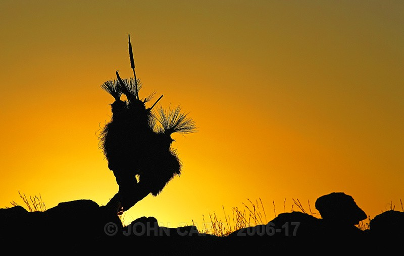 Sitting Bull Silhouette-1 - TREES, FLOWERS AND PLANT PHOTOS