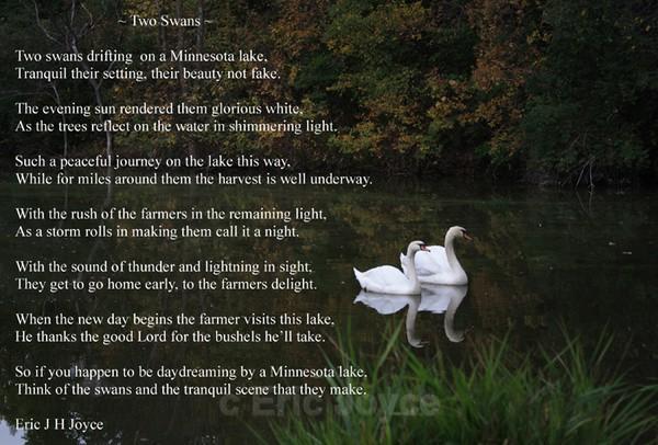 Two Swans Poem - SW Minnesota