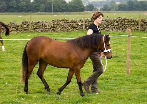 70 - Moniaive Horse Show 2008