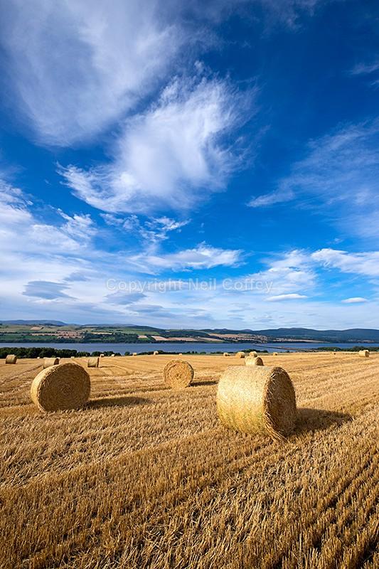 Hay bales near Culbokie, Black Isle, Highland - Portrait format