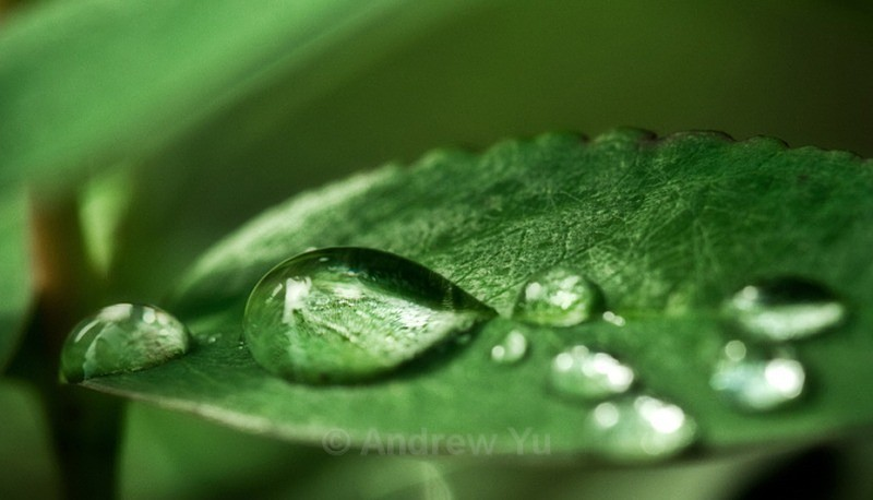 Water Droplets - Macro Photography