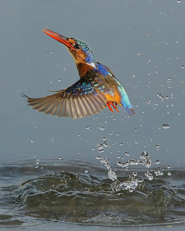 - Birds