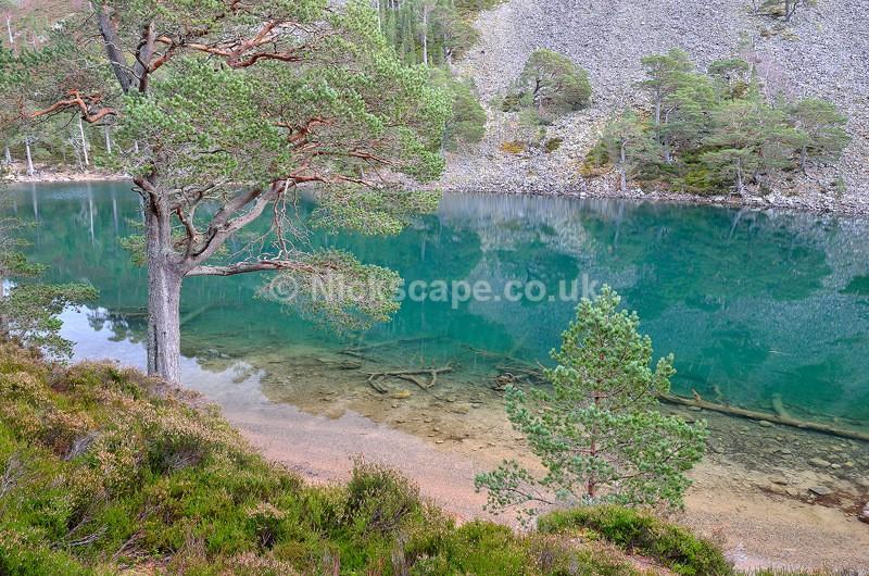 Green Loch Aviemore - An Lochan Uaine - Cairngorms - Scotland