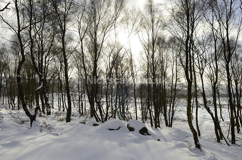 Snowy Beech Trees at Surprise View | Peak District | Gallery | Landscape Photography by Nick Cockman