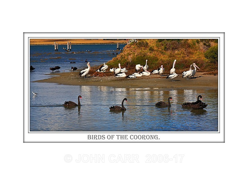 Beautiful Wall Art print  with a Border, showing Black Swans and Pelicans on the Coorong, South Australia.