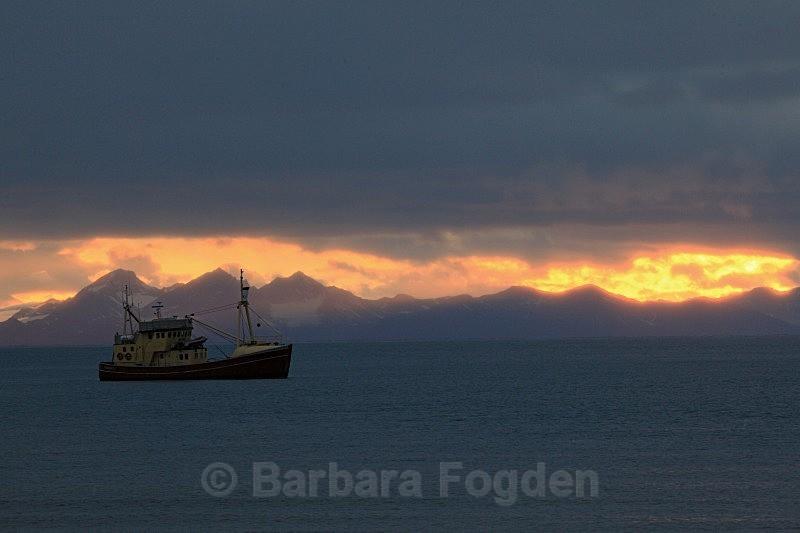 Isbjørn II 4726 - Colours of Svalbard