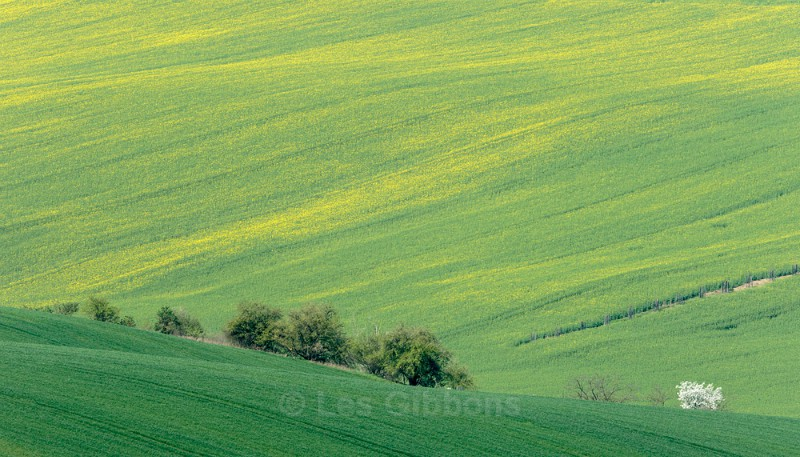 green hedges - Moravia