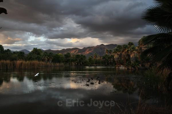 Agua Caliente Park - Tuscon, Arizona