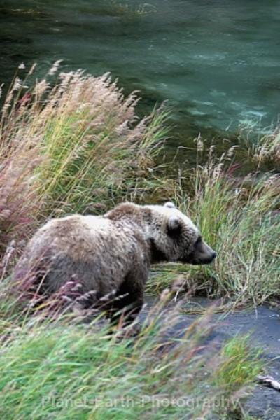 River Prowl - Around The World