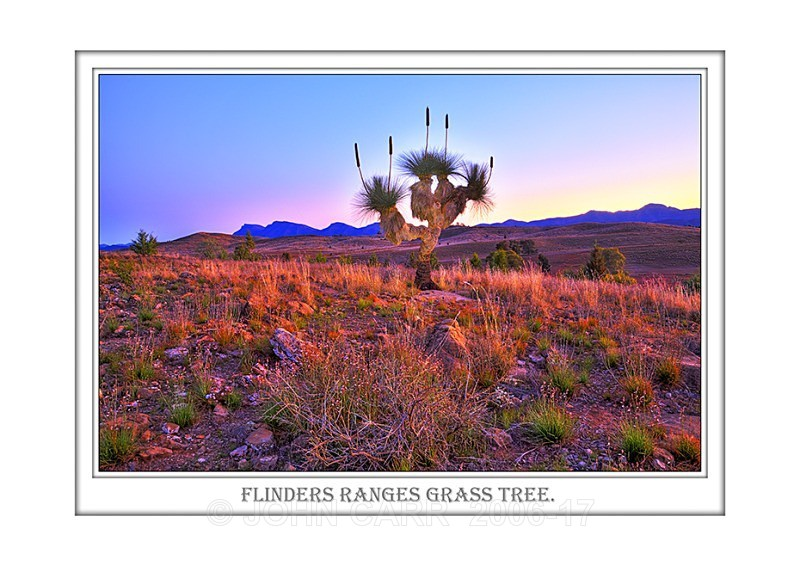 Beautiful Wall Art print  with a Border, showing Twilght over a Large Grass Tree, Flinders Ranges, South Australia.