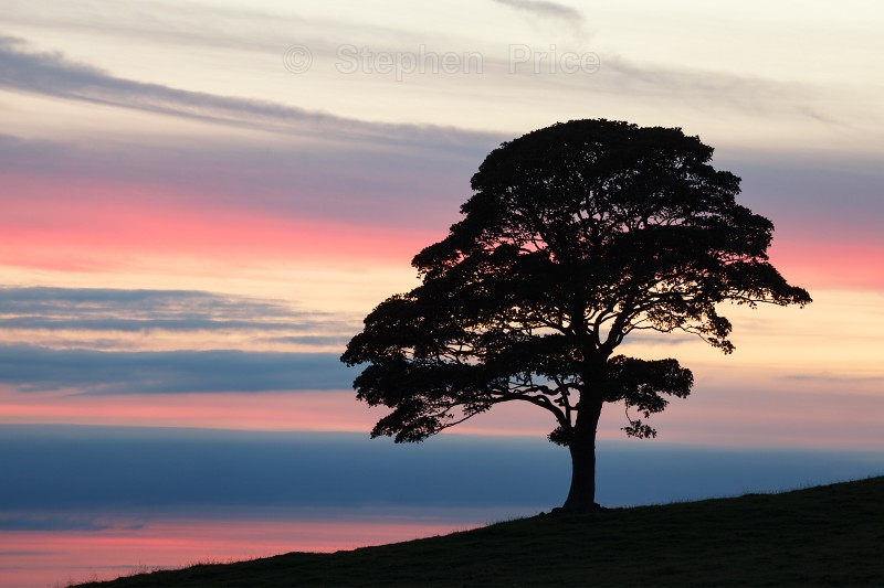 Lone Tree | Colourful Sky and Tree Silhouette