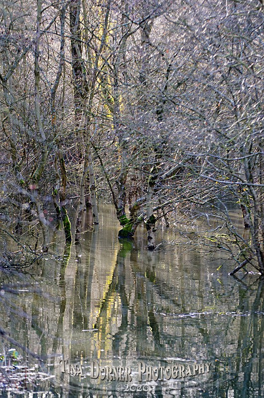 Spring Crystal - Winter in The Forest of  Dean & Wye Valley