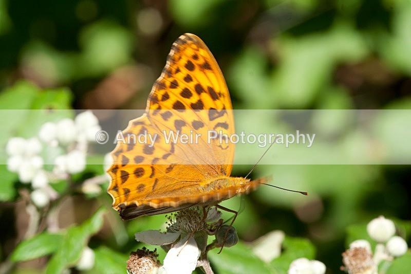 20080723-007-2 - Butterflies & Moths