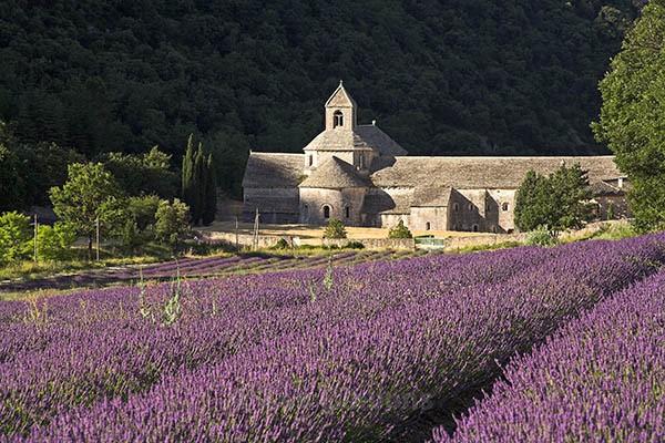 Abbey de Senanque - Provence