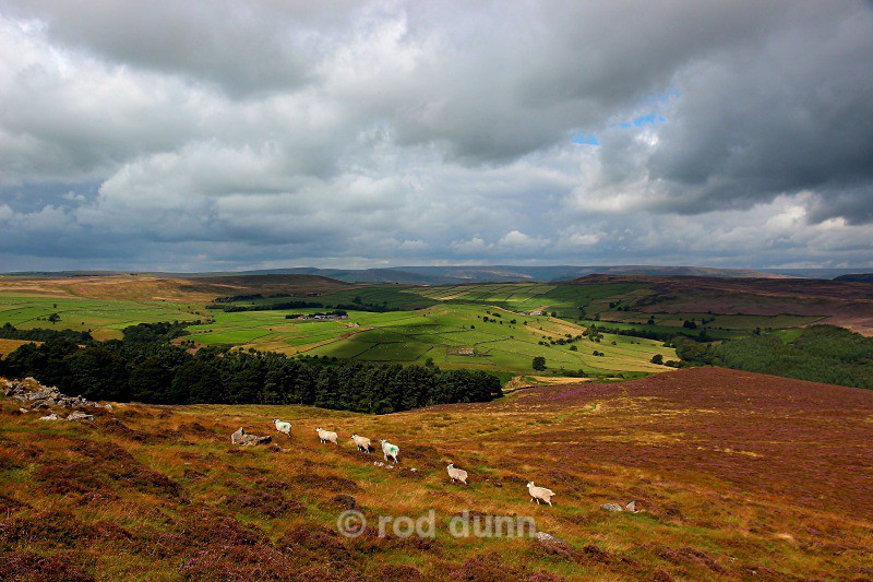Eyam Moor - Peak District