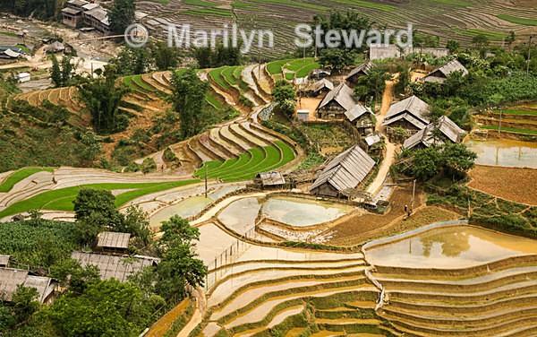 Northern Hills of Viet Nam - Exhibition acceptances