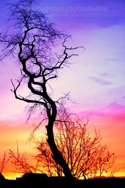 Philadelphia winter - Trees