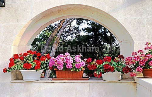 Mini-garden - Gardens & plants