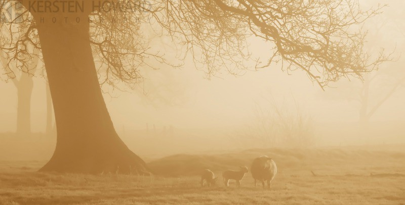 Morning Mist - Towy Valley - Wales