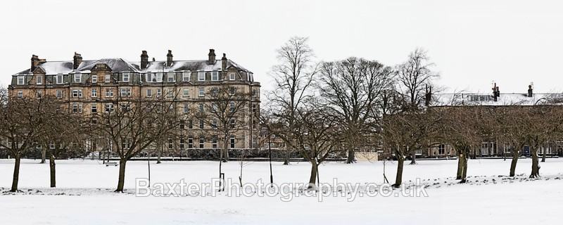 Spring Snow On The Cherry Blossom Walk (2.5 x 1 Version) - Harrogate Town