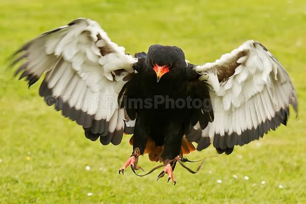 wow photo day-49 - Birds of Prey