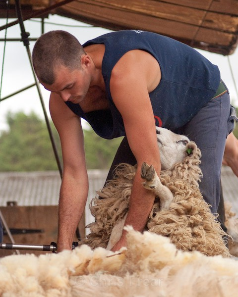 5 - Shearing Competition