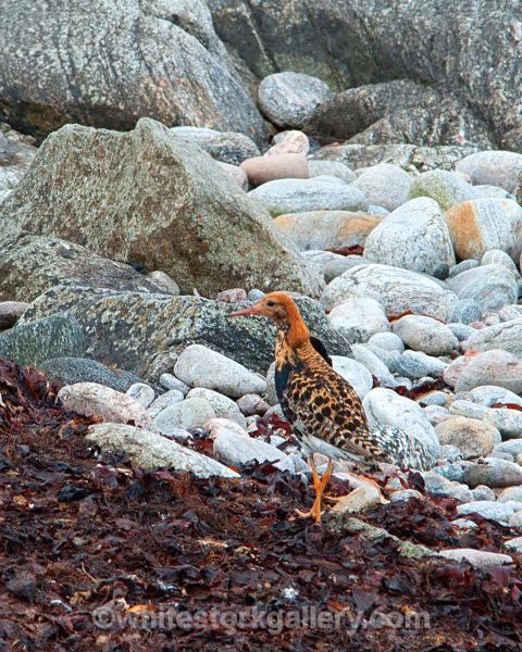 Bird Reserve Balranald Uist - Scottish Highlands
